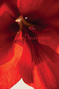Discernment Study Guide thumbnail